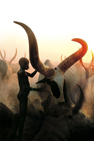 Dinka Boy with Long Horned Bull, South Sudan by Carol Beckwith and Angela Fisher