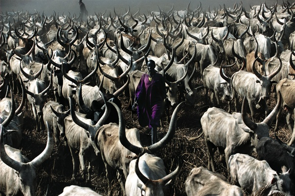 Dinka Herder in Purple Robe, South Sudan by Carol Beckwith and Angela Fisher