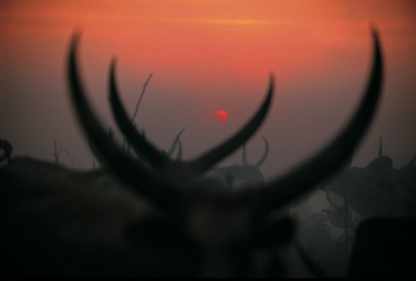 Horns in Setting Sun by Carol Beckwith and Angela Fisher