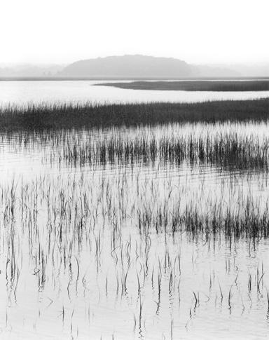 Nut Island, Salt Marsh Grasses by Dorothy Kerper Monnelly