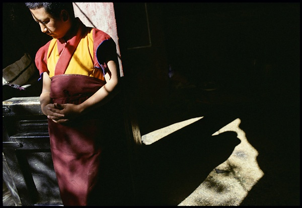Young Monk in Spring Sunlight by Marissa Roth