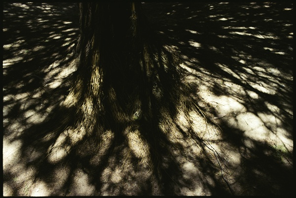 Tree Roots, Sun and Shadows by Marissa Roth