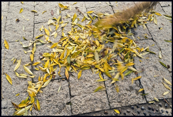 Sweeping Autumn Leaves by Marissa Roth