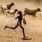 A Young Hamer Tribe Boy Herds His Goats and Sheep