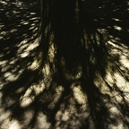 Tree Roots, Sun and Shadows