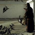Elderly Pilgrim Feeding Pigeons