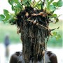 Dinka wearing Water Hyacinth, South Sudan<br />