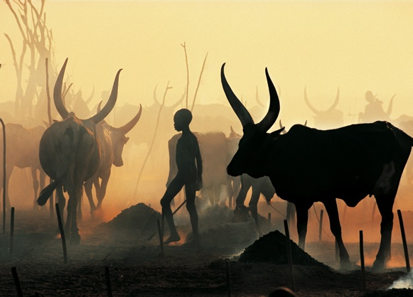 Dinka Boy Leading Black Bull, South Sudan by Carol Beckwith and Angela Fisher