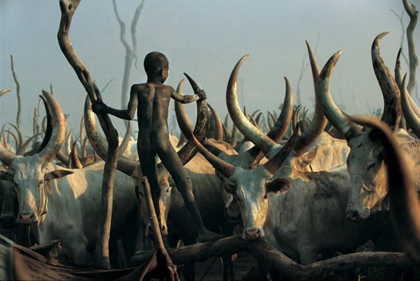 Dinka Child Climbing Among Horns, South Sudan by Carol Beckwith and Angela Fisher
