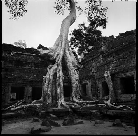Banyan temple, Angkor Watt 1 by Chris Rainier