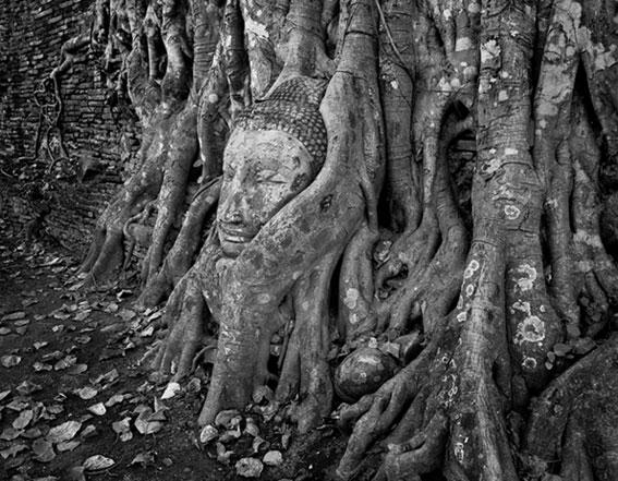 Buddha face, banyan tree by Chris Rainier