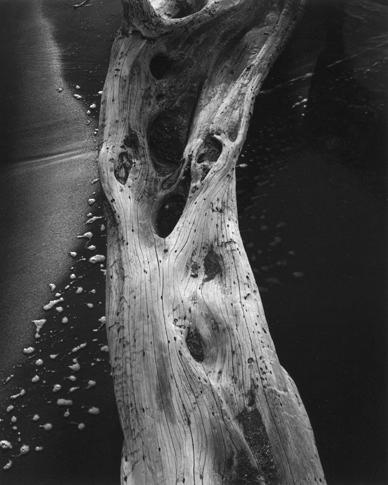 Mesquite Trunk, Foam by Dorothy Kerper Monnelly