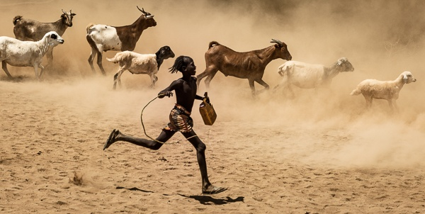 A Young Hamer Tribe Boy Herds His Goats and Sheep by John Rowe