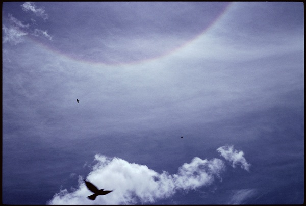 Crows and Halo by Marissa Roth