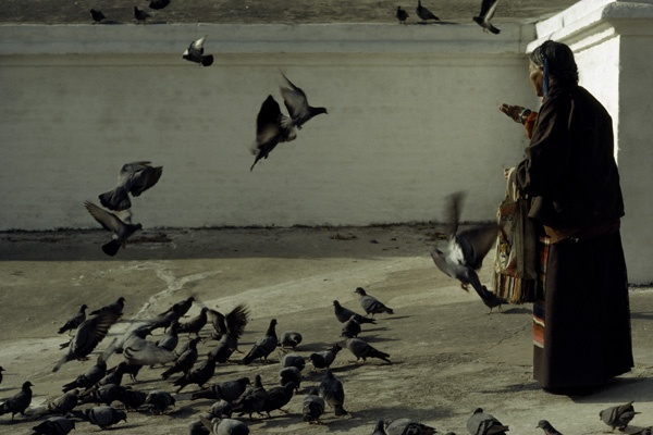 Elderly Pilgrim Feeding Pigeons by Thomas L. Kelly