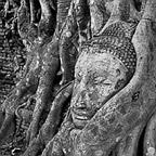 Buddha face, banyan tree