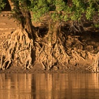 Exposed Roots of Trees Along the Omo River