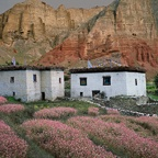 Two Houses, Blossoms, Cliffs