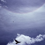 Crows and Halo