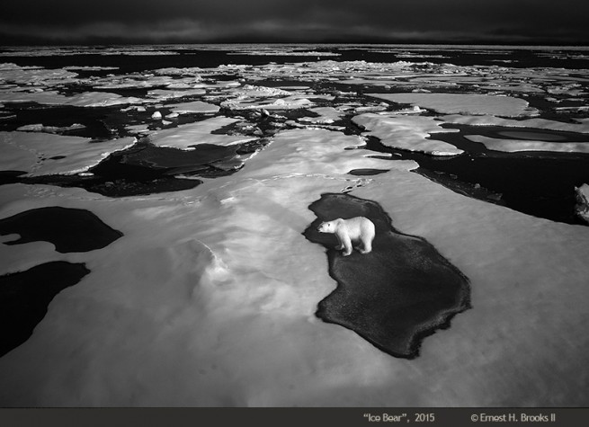 Ice Bear, 2015 © Ernest Brooks II